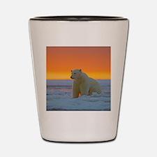 Polar Bear Shot Glass