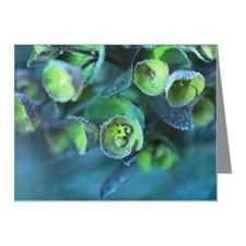 Euphorbia Note Cards (Pk of 10)