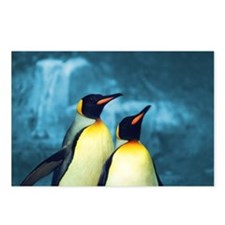 penguins Postcards (Package of 8)