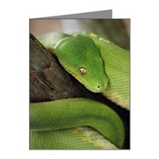 Green Tree Python, northern  Note Cards (Pk of 10)
