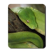 Green Tree Python, northern Australia, I Mousepad