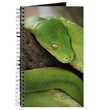 Green Tree Python, northern Australia, Ind Journal