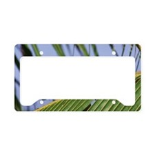 Red-lored parrot on a palm le License Plate Holder