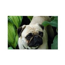 Pug standing on lawn Rectangle Magnet