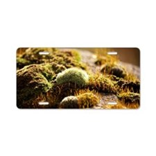 Moss and lichen on wall in  Aluminum License Plate