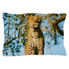 Low Angle View of a Leopard Pillow Case