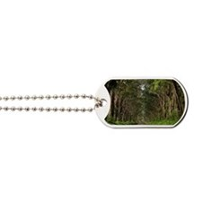 Tunnel of Trees, Kauai, Hawaii, USA Dog Tags