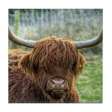 Face of Red Highland Cow , with full  Tile Coaster