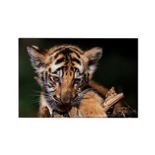 Young tiger cub chewing on sticks Rectangle Magnet