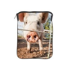 Close up of pig in pen iPad Sleeve