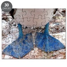 Blue footed boobies feet Puzzle