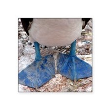 "Blue footed boobies feet Square Sticker 3"" x 3"""