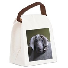 Posing Weimaraner Headshot Canvas Lunch Bag