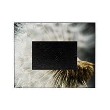 Bald and beautiful wind blows. Picture Frame