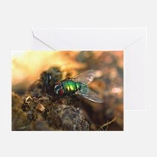 Fly on ... Note Cards (Pk of 10)