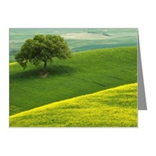 Val d'Orcia in Tuscany (Tosc Note Cards (Pk of 20)