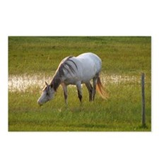 A white horse grazing in  Postcards (Package of 8)