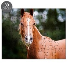 Young brown quarter horse eating grass. Puzzle