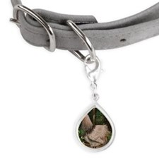 Rooster Solomon Small Teardrop Pet Tag