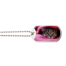 Cat hidden in pink rug. Dog Tags