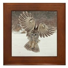 Barred owl hunting Framed Tile