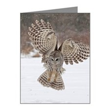 Barred owl hunting Note Cards (Pk of 10)