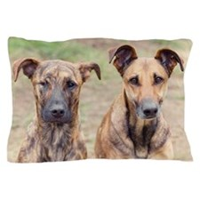 Two dogs sitting next to each other Pillow Case