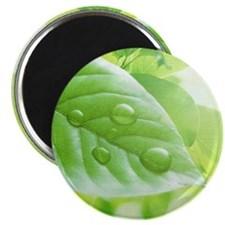 Green leaves and water drops Magnet