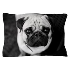 Pug with big eyes Pillow Case