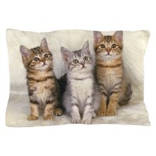 Three American Shorthair Cats Sitting  Pillow Case
