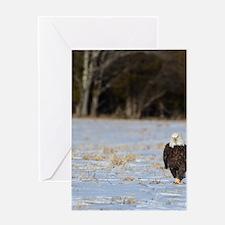 Mad eagle pic frame 2 Greeting Card