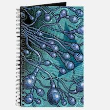 Human sperm cells, artwork Journal