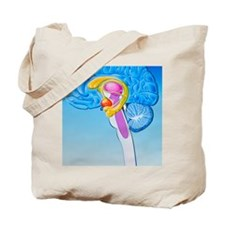 Illustration of anatomy of limbic system  Tote Bag