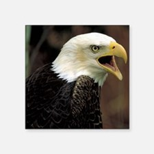 "Voiceful Bald Eagle Square Sticker 3"" x 3"""
