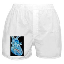 Illustration of electrical conduction Boxer Shorts
