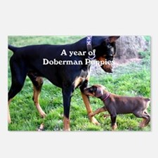 Doberman Puppy cover shot Postcards (Package of 8)