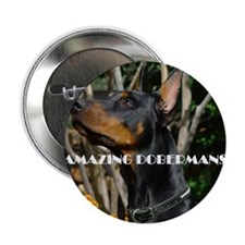 "Doberman Cover image 2 2.25"" Button"