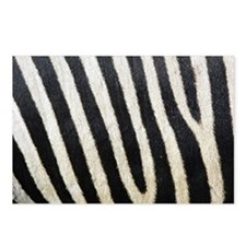 Zebra Print Postcards (Package of 8)