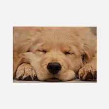 Golden Retriever Puppy Rectangle Magnet