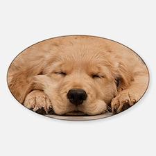 Golden Retriever Puppy Sticker (Oval)