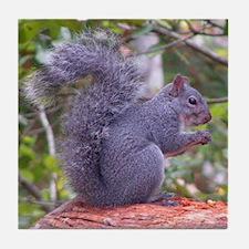 Western Gray Squirrel Tile Coaster