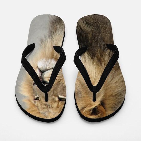 Lion Lovers Flip Flops