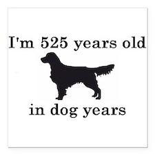 75 birthday dog years golden retriever 2 Square Ca