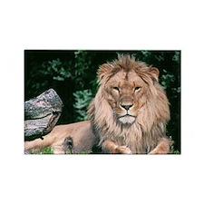 Lazy Lion Rectangle Magnet