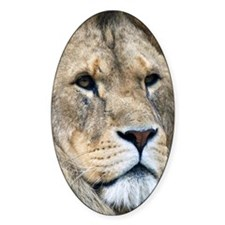 Lion iPad Folio Cover Decal