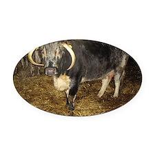 Longhorn Cattle Oval Car Magnet