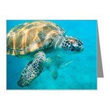 Close up of two sea turtles  Note Cards (Pk of 20)