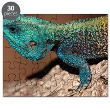 Close-up of a blue-headed tree agama lizard Puzzle