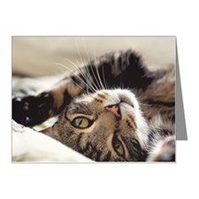Close up of tabby cat rollin Note Cards (Pk of 20)