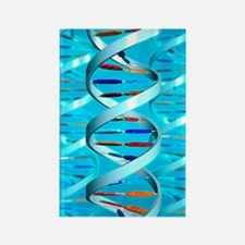 DNA helices Rectangle Magnet